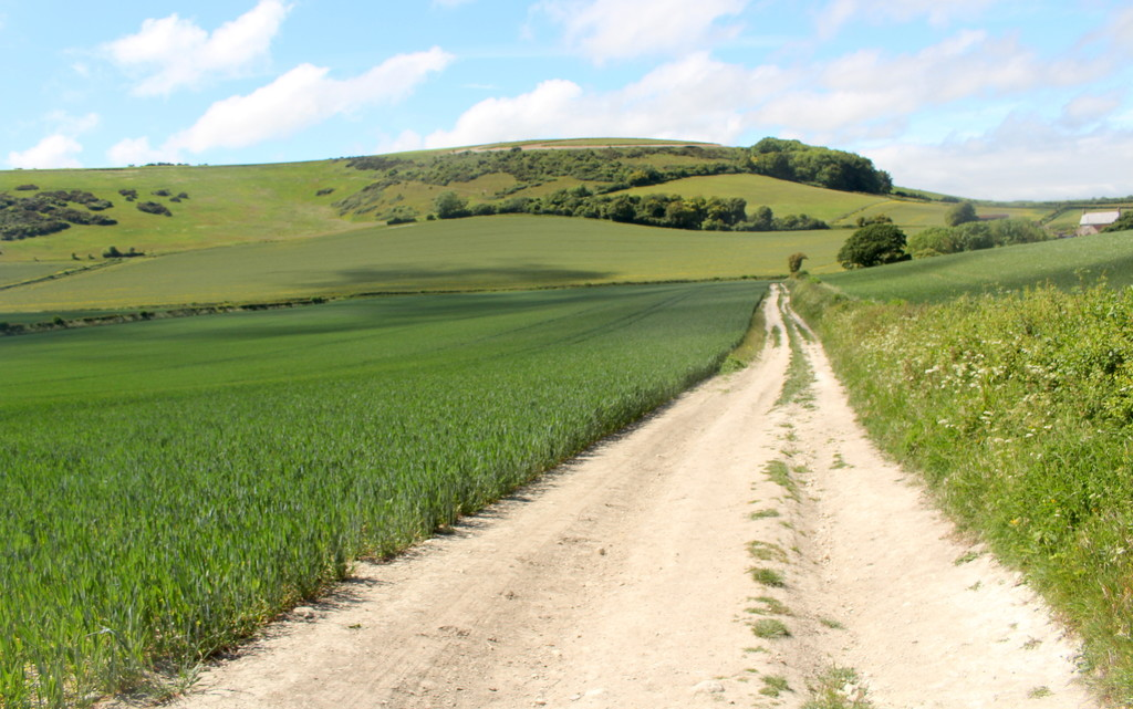 Chalk path on the downs around Gatcombe by boxplayer