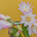 Cacti by tonygig