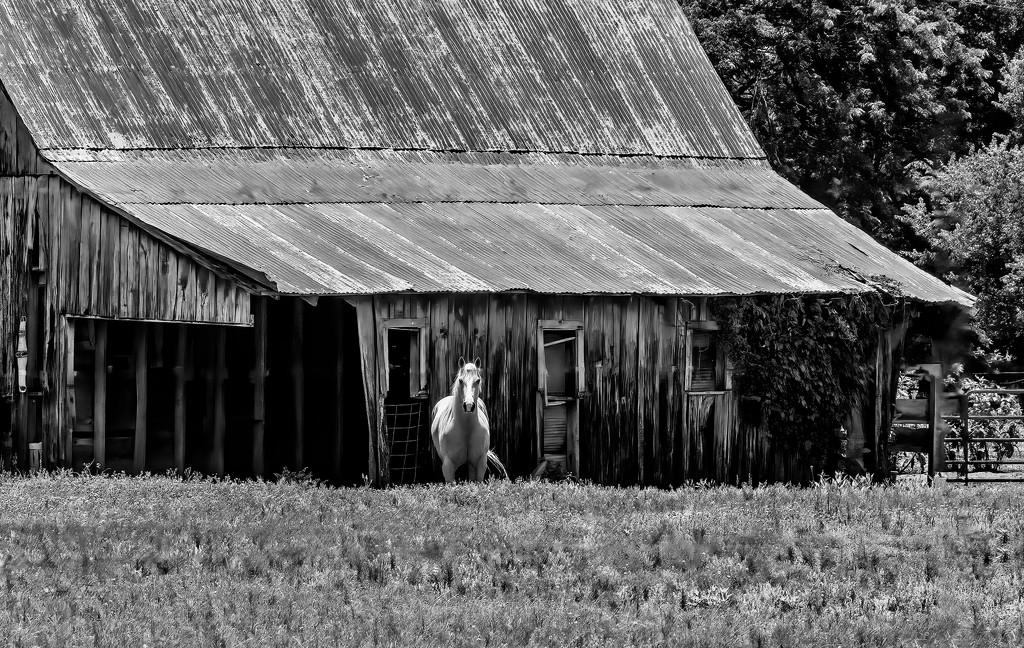 Horse Barn by samae