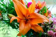 12th Jun 2019 - Orange lily