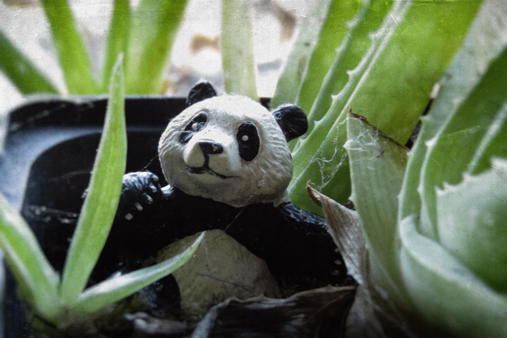 Panda goes wild by kali66