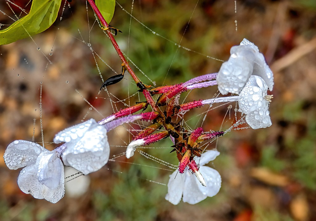 Dewdrops and little webs by ludwigsdiana