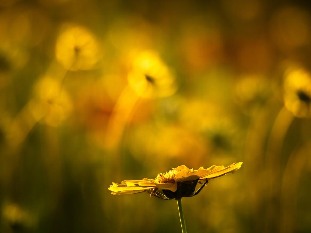 In yellow by haskar