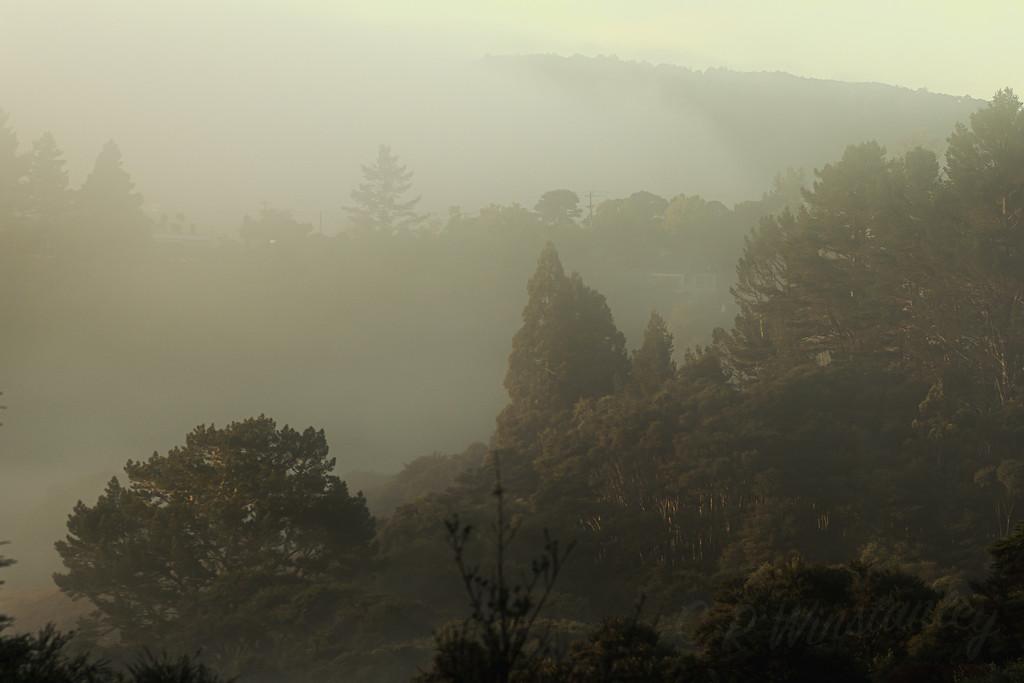 Foggy Morning by kipper1951
