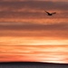 Orange sherbet sunrise