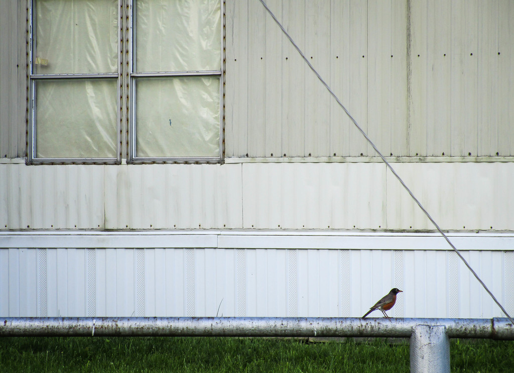 Bird on a pipe by mittens