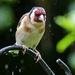 Grumpy wet bird!!