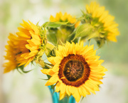 13th Jun 2019 - happy sunflowers