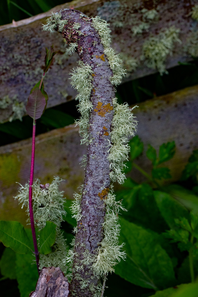 Lichen by lifeat60degrees