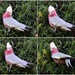 Four Poses Of  A  Galah ~