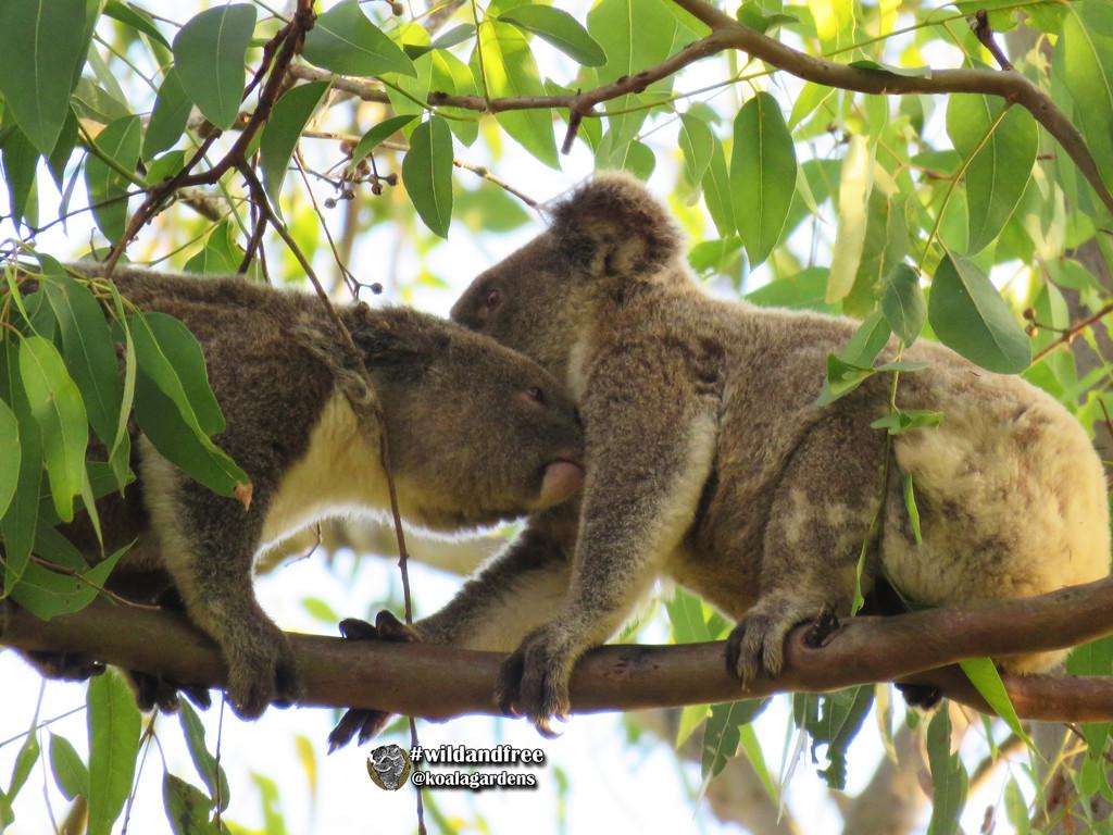 hold still you smell sooooo good by koalagardens