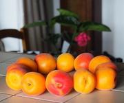 13th Jun 2019 - Shades of Apricot