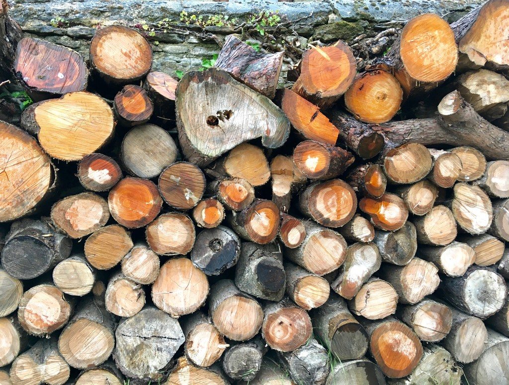 Logs by rosie00