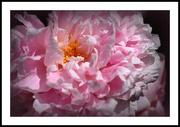 13th Jun 2019 - Flowers of our garden.