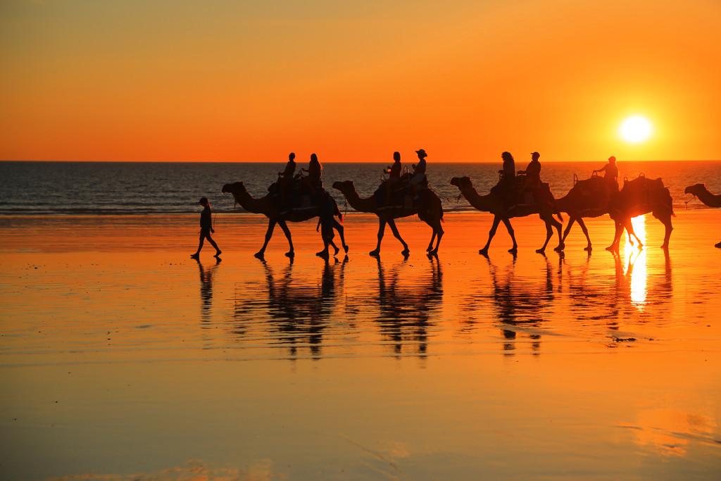 Camel train by rustymonkey