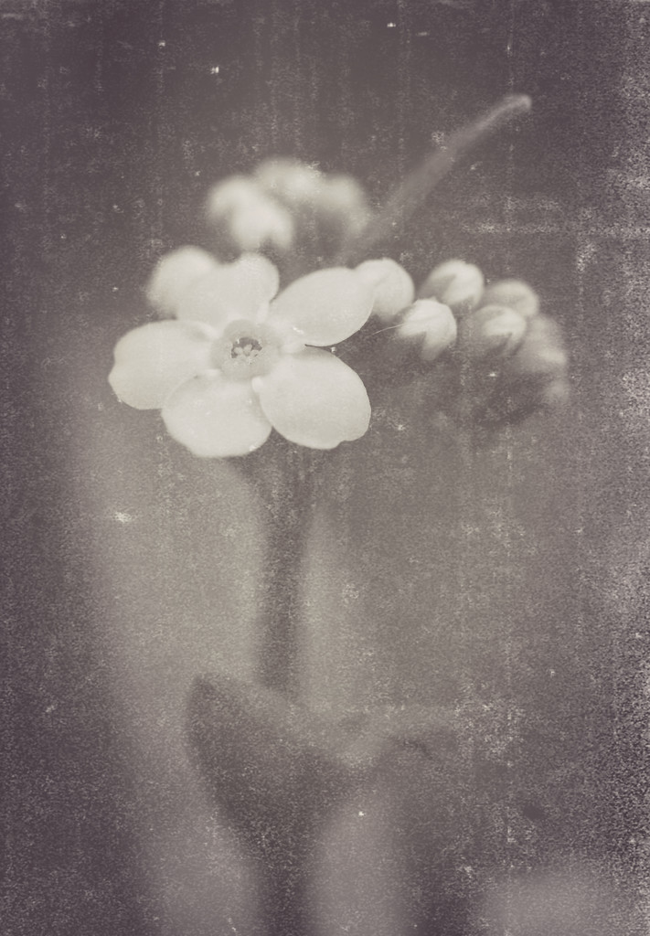 """In Search of Lost Time"" by juliedduncan"