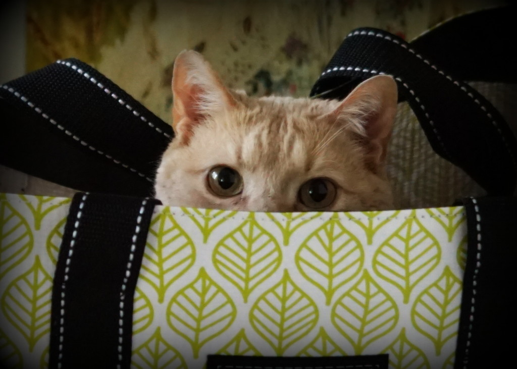 Cat in the Bag by sunnygirl