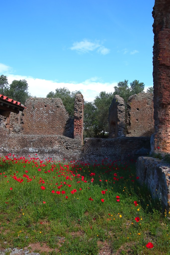 Poppies amongst the ruins by blueberry1222