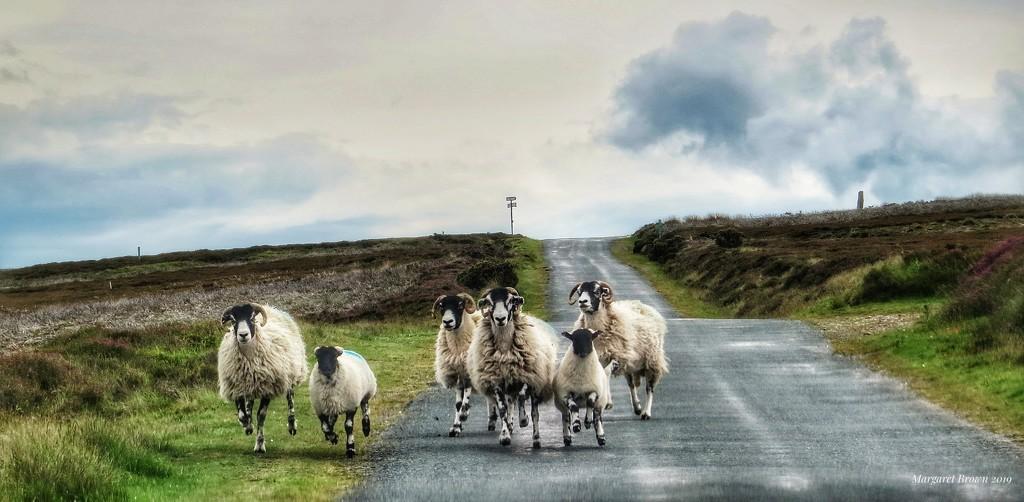 At a gallop!! by craftymeg