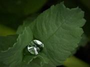14th Jun 2019 - garden Diamond
