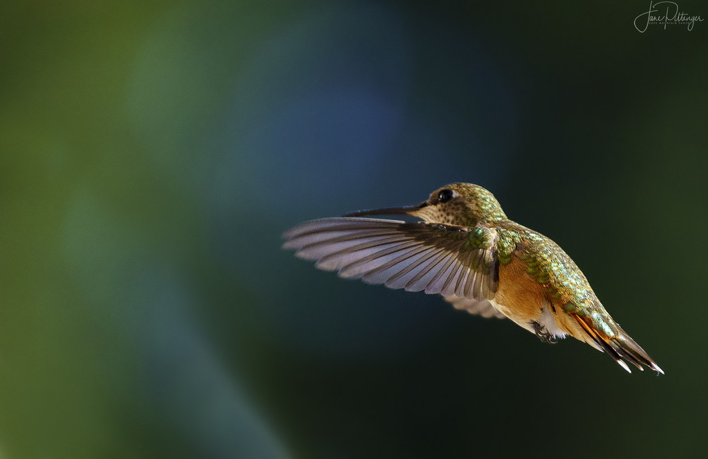 Hummer On A Mission by jgpittenger