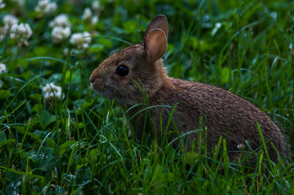 Early morning baby bunny by berelaxed