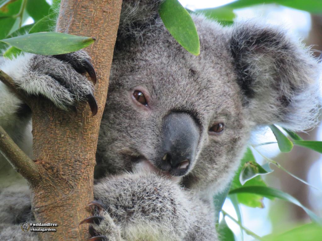 sleepy head by koalagardens