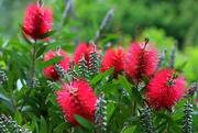 14th Jun 2019 - Flowers of our garden. (2)