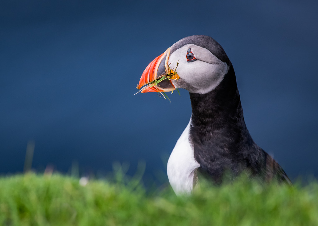 Pop-up puffin by inthecloud5