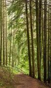 15th Jun 2019 - Dolgellau woods