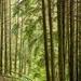 Dolgellau woods