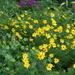 Now my garden is yellow