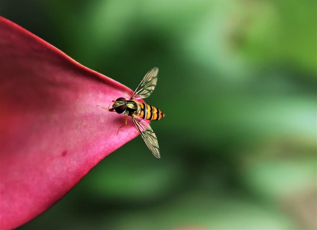 Parasite wasp I by madeinnl