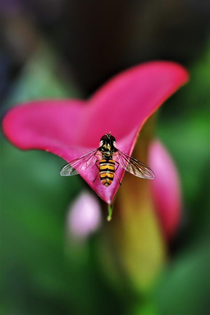 Parasite wasp III by madeinnl
