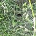 Lurking Labyrinth Spider