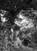 15th Jun 2019 - 2 Trunk Tree