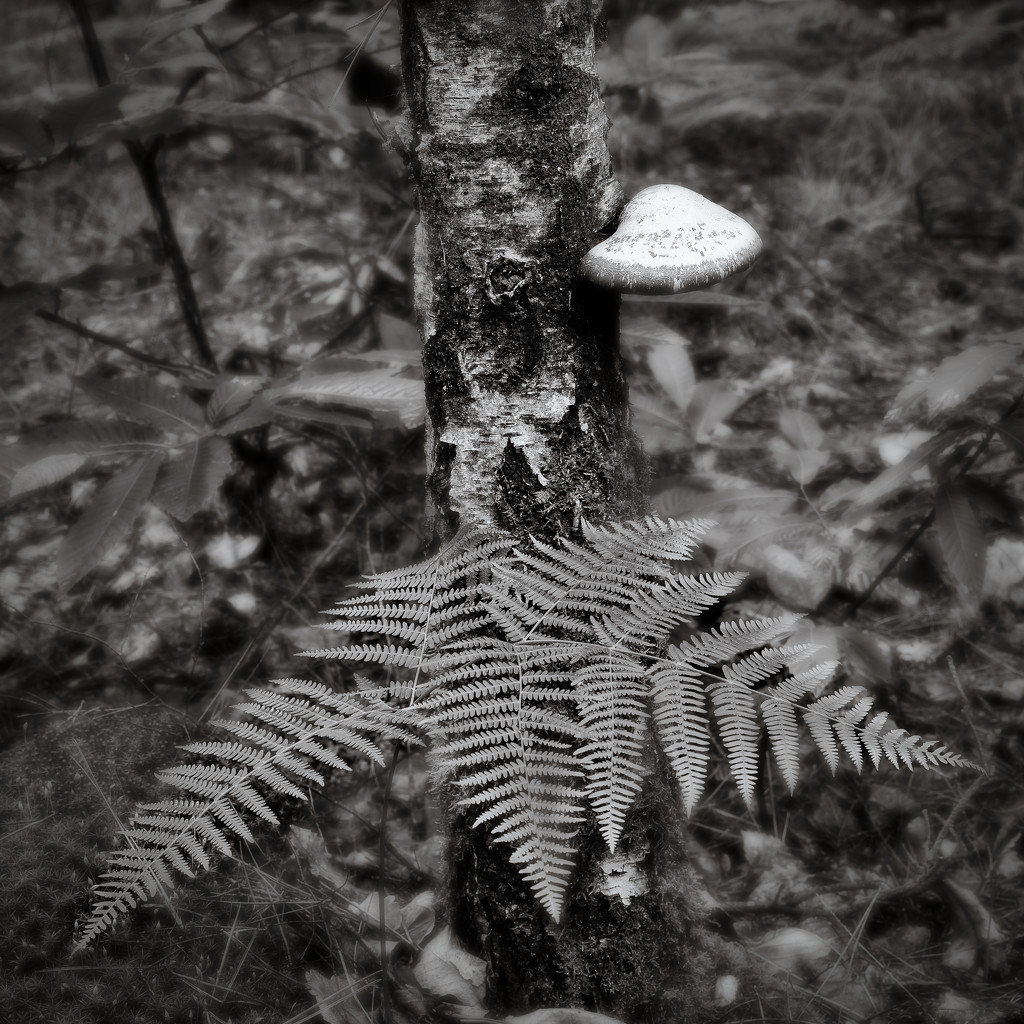 Fern and Fungus... by vignouse