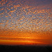 Mackeral Sky Sunrise