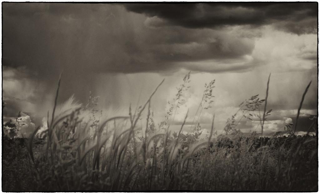 June rain by joysabin