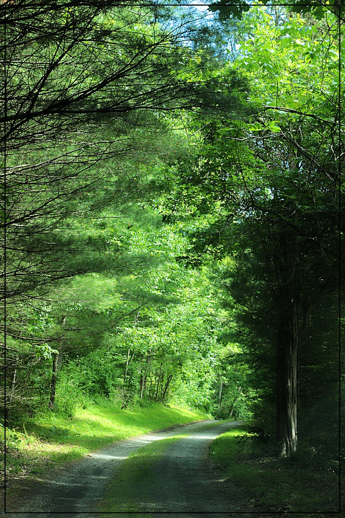 The Road to Marie Zimmerman's House by olivetreeann