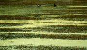 12th Jun 2019 - Ankeny Wetlands