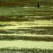 Ankeny Wetlands
