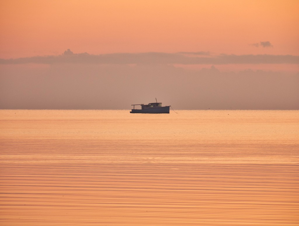The boat by corymbia