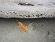 9th Jun 2019 -  beach leaf