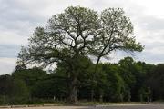16th Jun 2019 - Tree:  7 May 2019