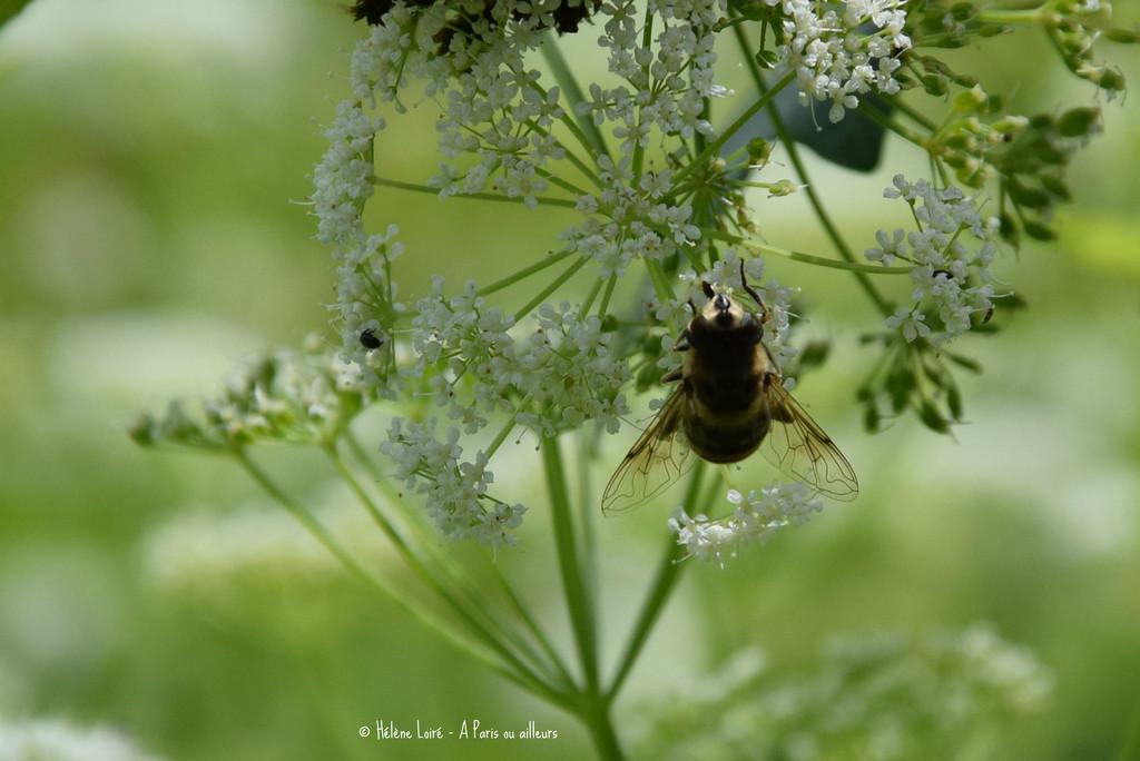 bee by parisouailleurs