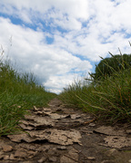 16th Jun 2019 - Path through the grass
