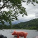 piglet goes to Waterhead in two parts