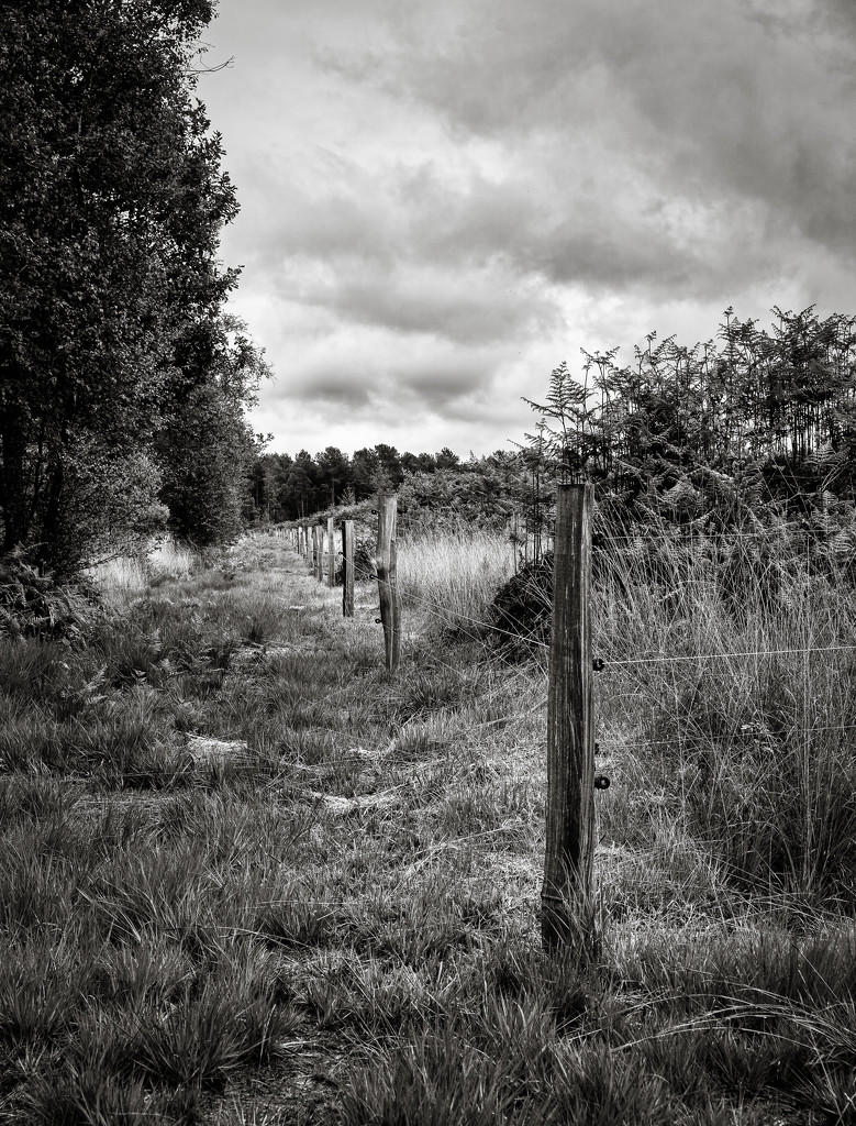 Occasional Fence Post 35... by vignouse
