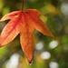 Autumn Colours_DSC2827  by merrelyn